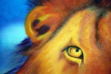 eye-and-ear-of-male-lion
